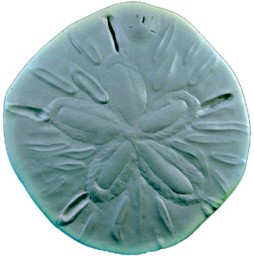 Sand Dollar Concrete Stepping Stone Mold