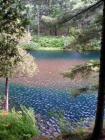 pondcolorant.jpg